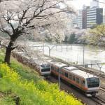 【Tokyo Train Story】桜と菜の花がある春の景色(中央線)