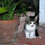 東京の路地裏 猫画像特集