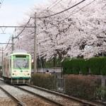 【Tokyo Train Story】今年も都電荒川線沿線の桜は満開になりました
