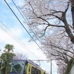 【Tokyo Train Story】桜を見上げながら都電荒川線沿線を歩く