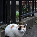 路地裏にはやっぱり猫がよく似合う