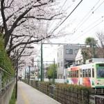 【Tokyo Train Story】都電荒川線沿線の桜を見てみよう!