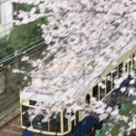 【Tokyo Train Story】桜の木の下を駆け抜ける青い都電のレトロ風車両
