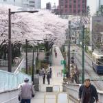 【Tokyo Train Story】荒川自然公園の入り口から眺める桜(都電荒川線)