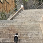 ネコに導かれて尾道の町を一望するポイントで撮影する 広島尾道満喫の旅 その18