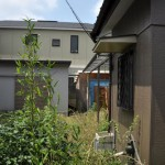 豊島区西巣鴨2丁目 草生す庭の井戸ポ ンプ