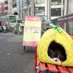 【Tokyo Train Story】線路脇にあるネコの寝床(都電荒川線)