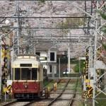 【Tokyo Train Story】飛鳥山公園の桜に向かって走る都電荒川線のレトロ風車両9001