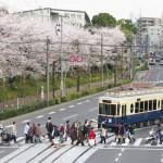 【Tokyo Train Story】桜咲く飛鳥山公園脇で都電荒川線のレトロ風車両を撮影する