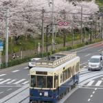 【Tokyo Train Story】都電のレトロ風車両と飛鳥山公園の桜