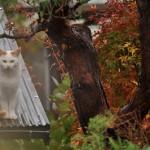 長野県岡谷市の丸山タンクを守護するネコたち 紅葉の長野旅行 その16