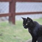 尾道の三重塔の近くにあるネコ広場でたっぷりとネコの撮影をする 広島尾道満喫の旅 その22