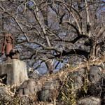 上毛電鉄富士山下駅付近で「井戸と鉄道」写真を撮影する 冬の青春18きっぷで行く両毛線の旅 その5