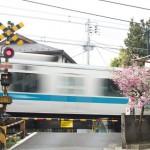 【Tokyo Train Story】小さな踏切脇の小さな桜(小田急小田原線)