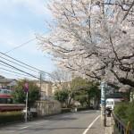 【Tokyo Train Story】春の小川に桜咲く(小田急小田原線)