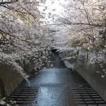 今年も夕闇迫る目黒川の桜を撮影してきた! その1