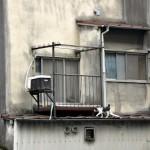 港区三田1丁目の猫たち 麻布十番散策 その10