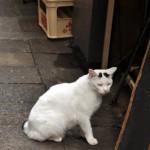 麻布十番のラーメン屋さんの裏にいた麻呂猫 麻布十番散策 その11