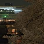【Tokyo Train Story】目黒川の夜桜(東急東横線)