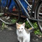豊島区雑司が谷2丁目 堂々と座り続けるネコ