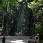 明治神宮の自然を満喫する 明治神宮散策 その5