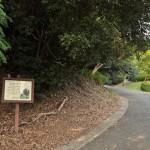 比治山公園はネコ達の楽園だった 広島尾道満喫の旅 その36