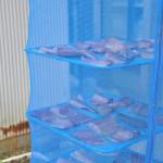 太海の町のネコたちを撮影する 春の南房総への旅 その12