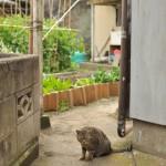 太海の路地裏で頭にご飯粒をのっけたネコに挨拶をされる 春の南房総への旅 その17