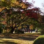 紅葉が待ち遠しい!11月18日(日)の六義園を撮影してきた