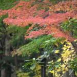 東京23区内にも秋の景色がやって来た! 11月24日の小石川後楽園の紅葉風景 その1