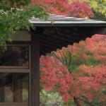 小石川後楽園の庭園が紅葉によってさらに美しさを増す 11月24日の小石川後楽園の紅葉風景 その2