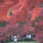 東京23区内で気軽に楽しむ紅葉散歩 11月24日の小石川後楽園の紅葉風景 その3