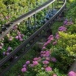 【Tokyo Train Story】アスカルゴのレール沿いに咲き乱れる紫陽花