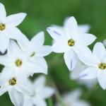 今週の365 DAYS OF TOKYO(5月27日~6月2日) ~ 春の花にあふれた路地裏風景