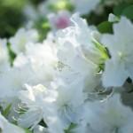 西日暮里駅前から花咲く路地裏ある気がスタートする 春の谷中フォトウォーク2013 その1