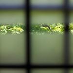 旧安田邸のお屋敷の中で大正・昭和に想いを馳せる 春の谷中フォトウォーク2013 その6