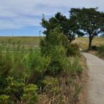 矢切の野菊のこみちの農村地帯を歩く 柴又散策2012 その7
