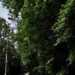 千葉県の矢切のネコと花の散歩道 柴又散策2012 その8