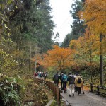 高尾山1号路のみごとな紅葉を見ながら登山がスタート 紅葉の高尾山登山 その2