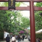 根津神社のつつじまつりで満開のツツジを愛でる 春の谷中フォトウォーク2013 その8