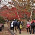 高尾山から城山へ向かうと雨と雪が待ち構えていた 紅葉の高尾山登山 その5