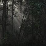 雨上がりの奥高尾を歩き小仏峠へ 紅葉の高尾山登山 その6