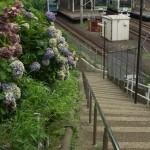 【Tokyo Train Story】紫陽花とのお別れ(山手線)