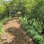 塔ノ岳の山中でのシカとの出会い ヤビツ峠から塔ノ岳への表尾根縦走コース その9