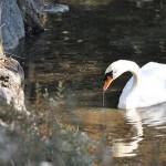 三島の楽寿園のカピバラ温泉タイム 冬の青春18きっぷで三嶋大社初詣の旅 その2