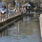 水路の町三島の楽しい散策路 冬の青春18きっぷで三嶋大社初詣の旅 その5