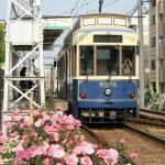 【Tokyo Train Story】荒川車庫前電停のバラ(都電荒川線)