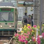 【Tokyo Train Story】色とりどりのバラに囲まれた荒川車庫前電停(都電荒川線)