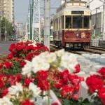 【Tokyo Train Story】紅白のバラが咲き乱れる都電荒川線沿線