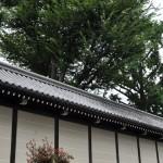 東本願寺の蓮の花と七条大橋 夏の京都旅行2012 その6